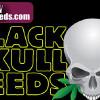 Free Five-O seeds at dope-seeds.com