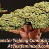 justfeminized.com now stocking Blackskull seeds