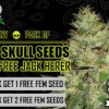 Free blackskull promo seeds at choice seedbank