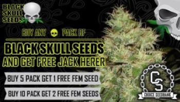 Free blackskull promo seeds at choice seedbank