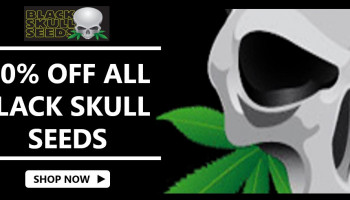 20% off Blackskull seeds January 2020