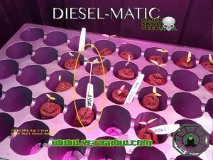 diesel matic by yetigrow