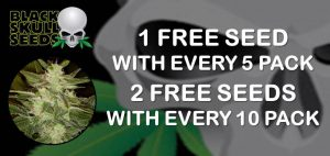 free blackskull seeds