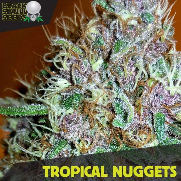 tropical nuggets