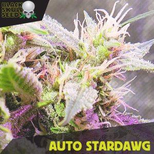 blackskull AUTO stardawg seeds